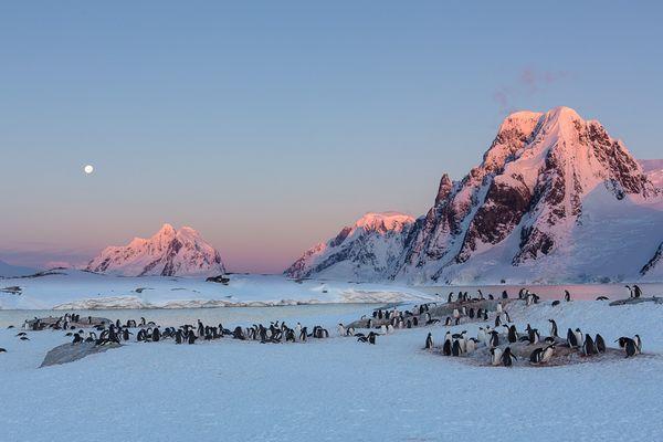 Sonnnenuntergang mit Pinguinen