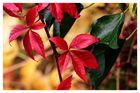 Sonntag-Herbst-Bild