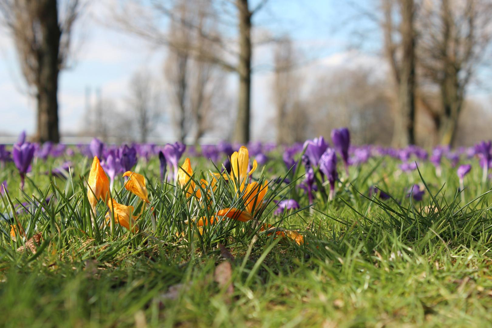 Sonntag Nachmittag war Frühling