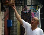 Sonntagmorgens im Hutong - Da verbringt man seine Zeit mit Voegeln