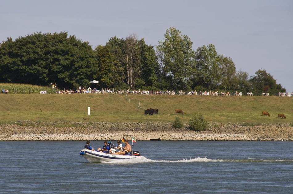 Sonntags am Rhein #2