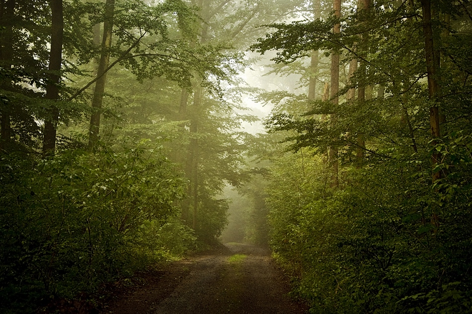 Sonntags Wald