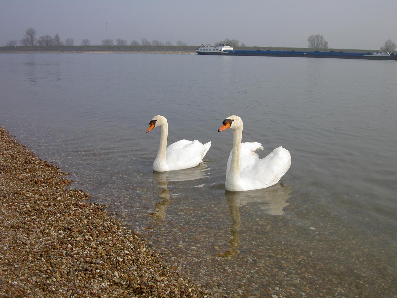 Sonntagsausflug am (im) Rhein