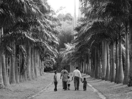 """Sonntagsausflug im """"Royal Botanic Gardens"""" in Peradeniya, Sri Lanka"""