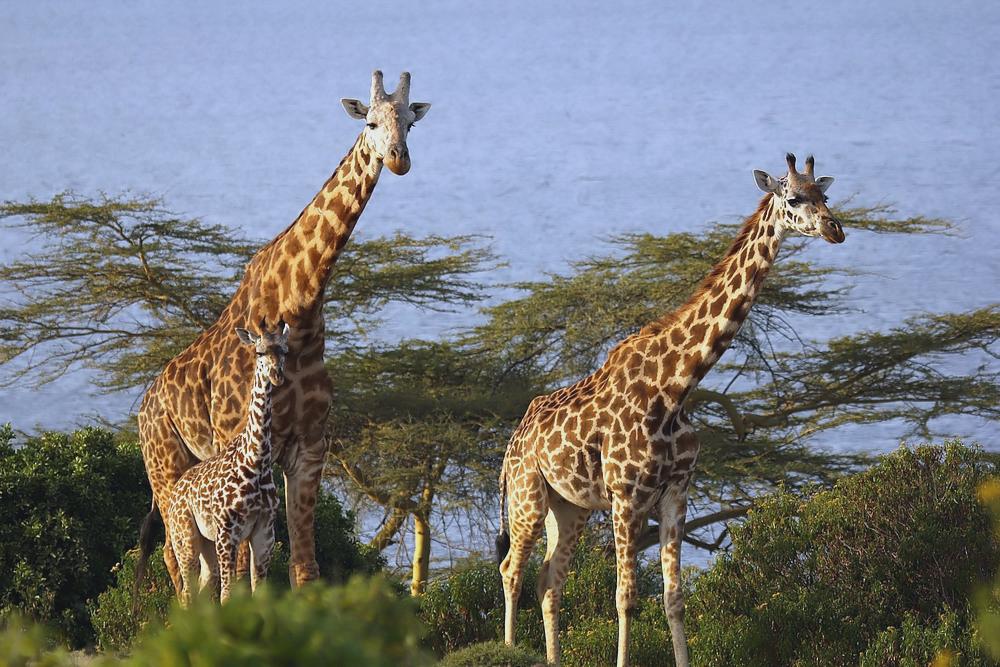 Sonntagsausflug zum Naivasha-See