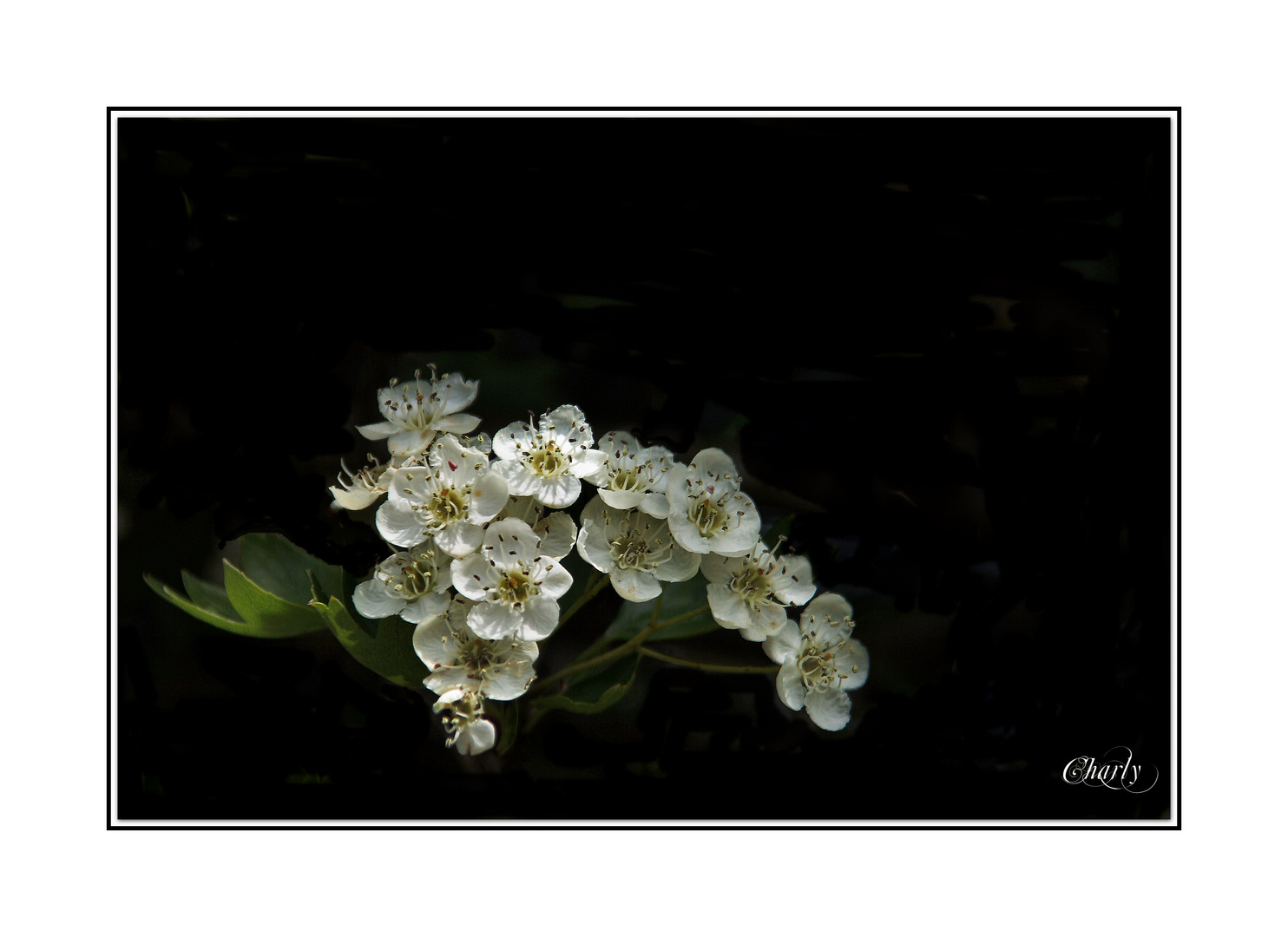 sonntagsblüten..........