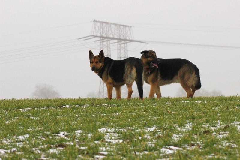 Sonntagsspaziergang über die Felder - am frühen morgen mit Bruno und Moritz