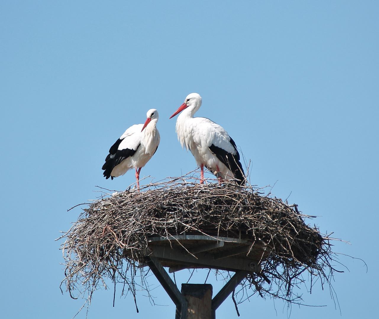 Sonntagsvögel