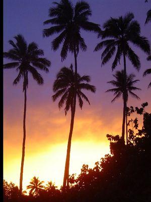 Sonnuntergang hinter Palmen