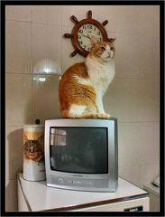 Sono un gatto vanitoso
