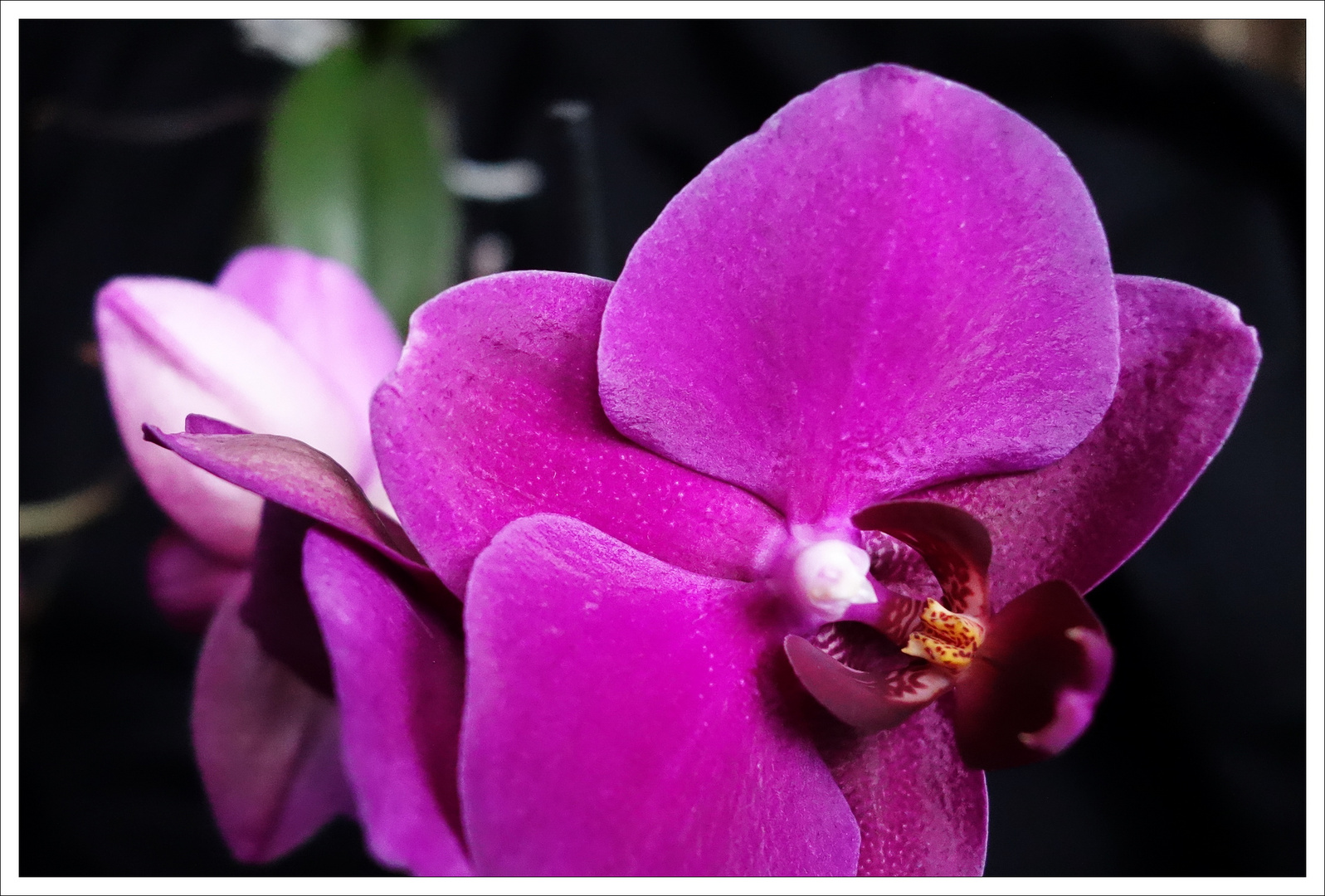 Sony RX100, Orchidee
