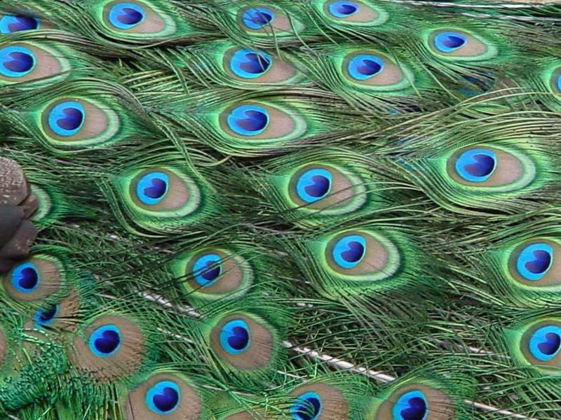 Sooo Blaue Augen