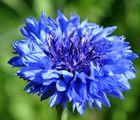 sooo blue