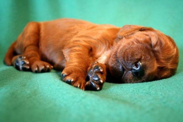 Sooo müde!
