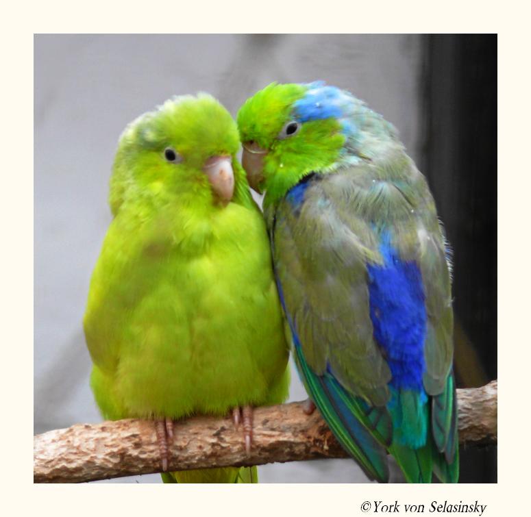 Soooooo verliebt:-))