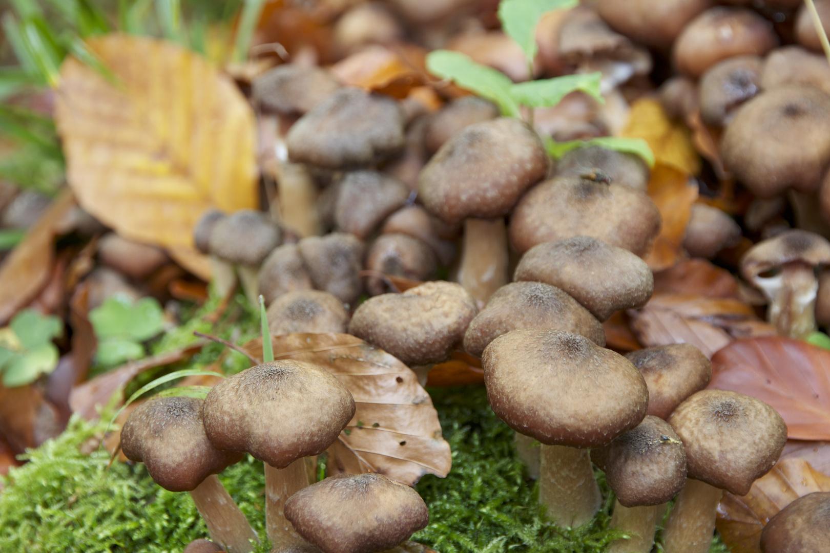 Soooooo viele Pilze :)