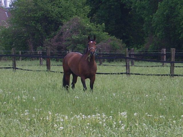 Sophia das erste mal im Jahr auf der Weide