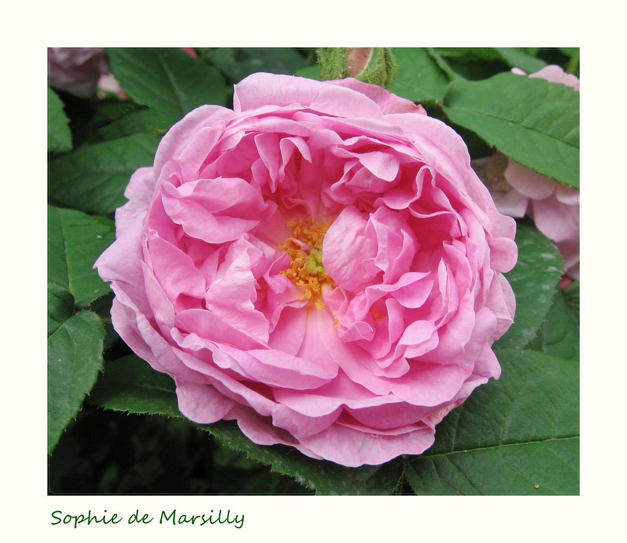 Sophie de Marsilly
