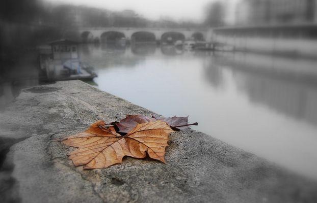 Sopravvissuta all'autunno.
