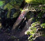 sorge il sole riflessi sulla ragnatela - sos per migliorare