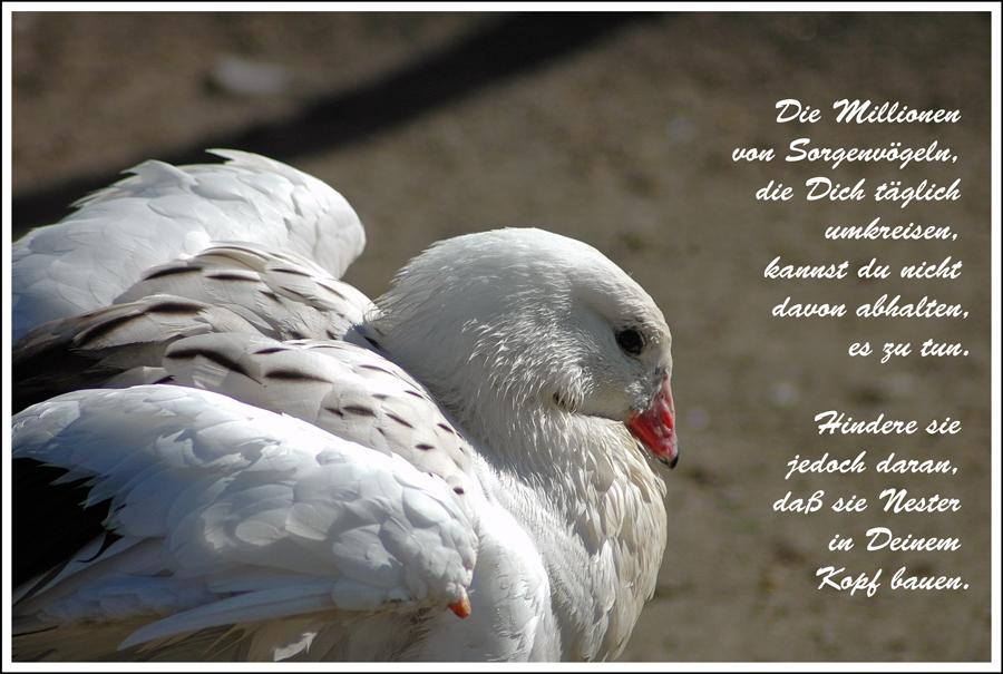 Sorgenvögel