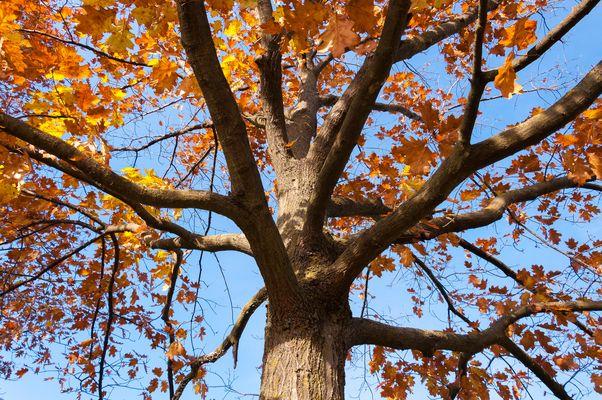 Sorriso d'autunno al parco...