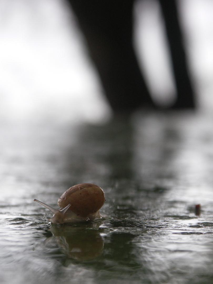 Sortie après la pluie