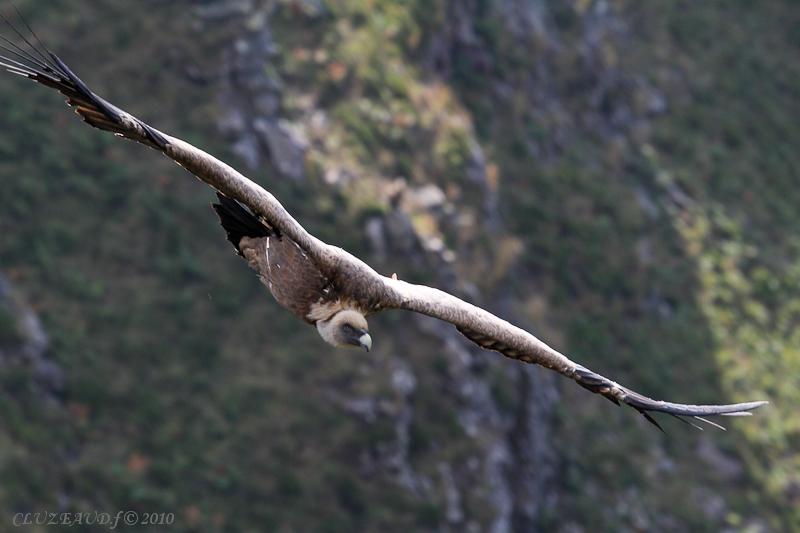 sortie vautours 01