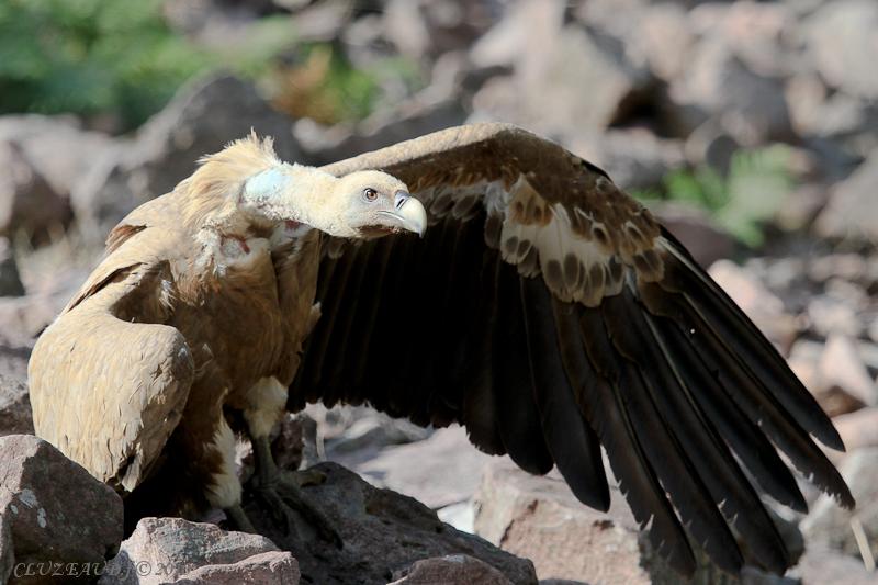 sortie vautours 03