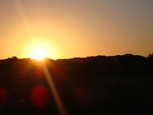 souche de soleil boussaada