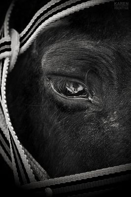 Soul of animals is seen by their eyes.