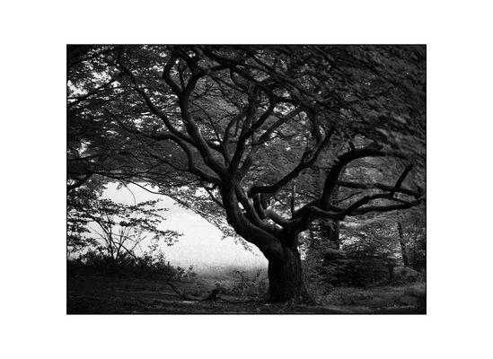 sound of the tree...3
