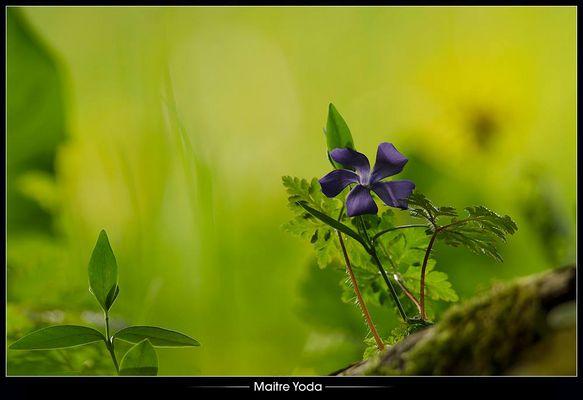 •Soupçon de violet•