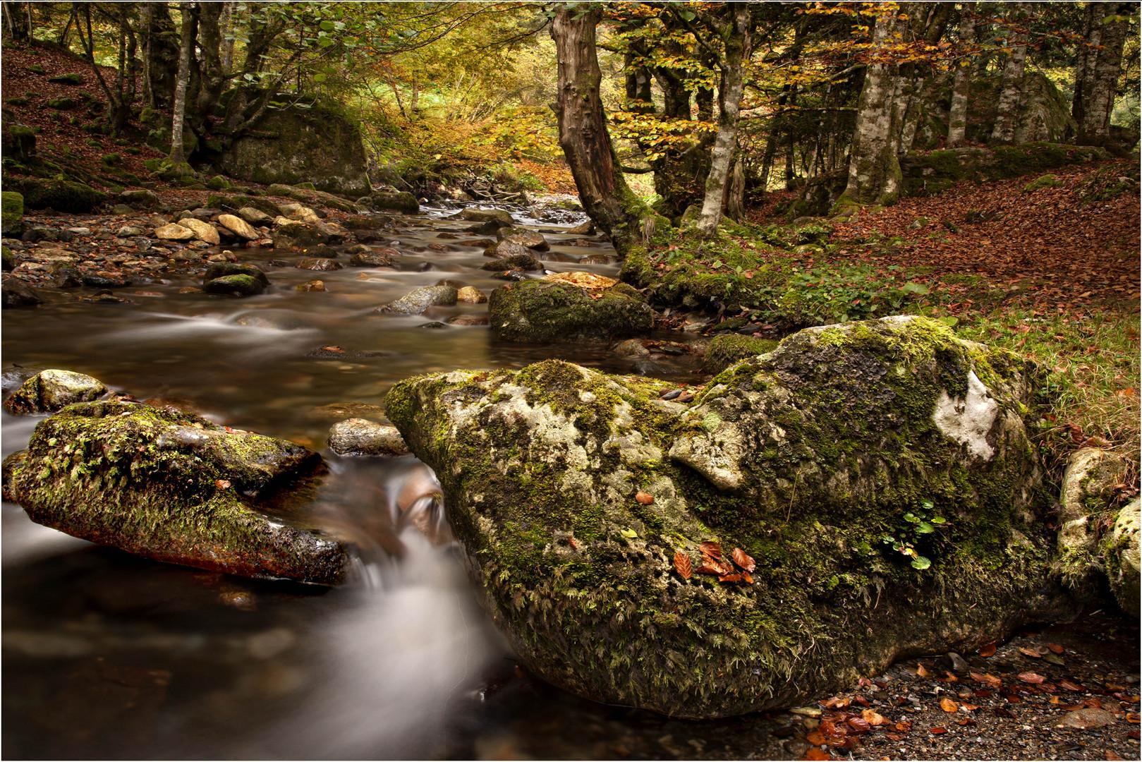 Sous bois l 39 automne photo et image paysages paysages - Sous bassement en bois ...