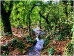 Sous-bois de Provence