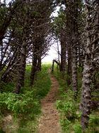 Sous bois en Auvergne