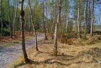 sous bois en forêt de fontainebleau