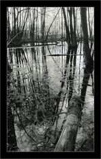 Sous bois innondé