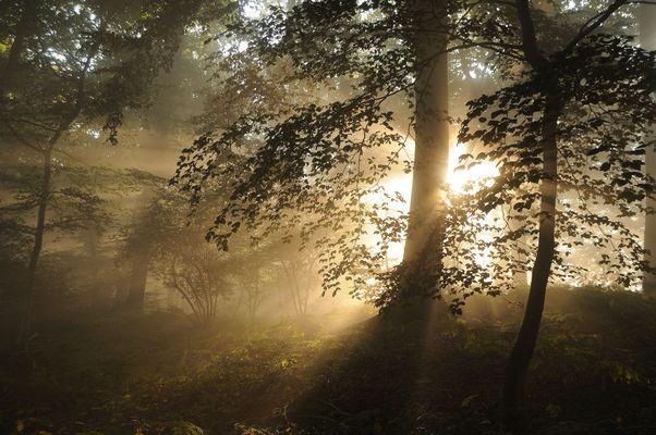 Sous bois irisé par le soleil naissant