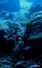 sous l eau2