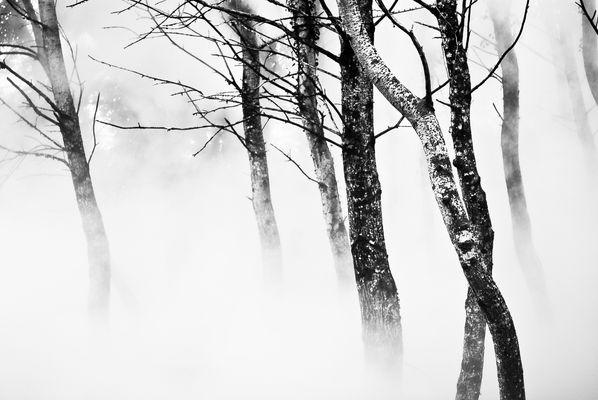 Sous la brume, l'écorce.