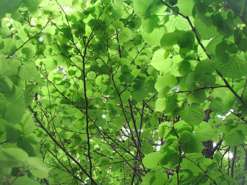 Sous la fraicheur de l'arbre