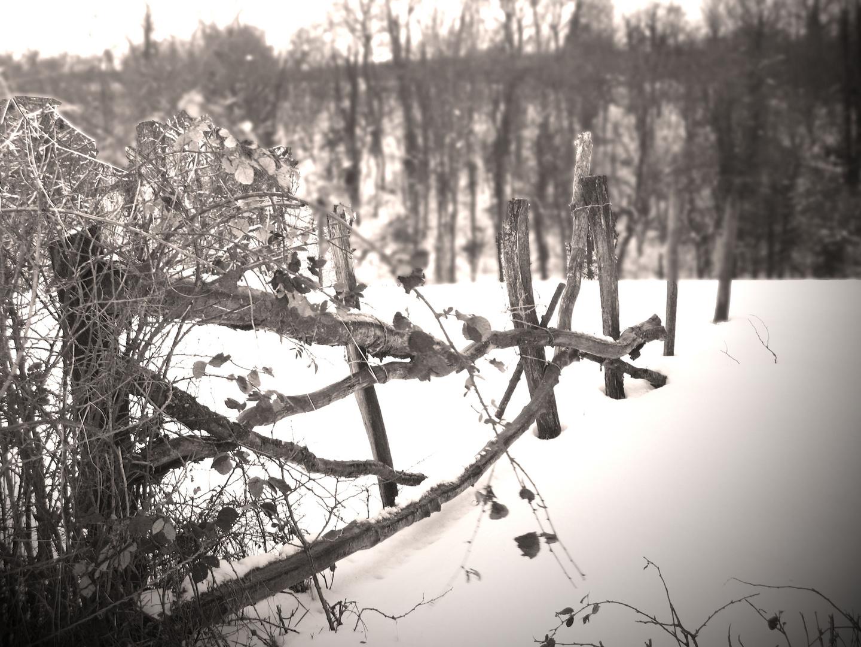 Sous la neige...