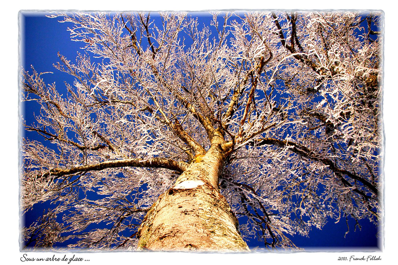 Sous l'arbre de glace.