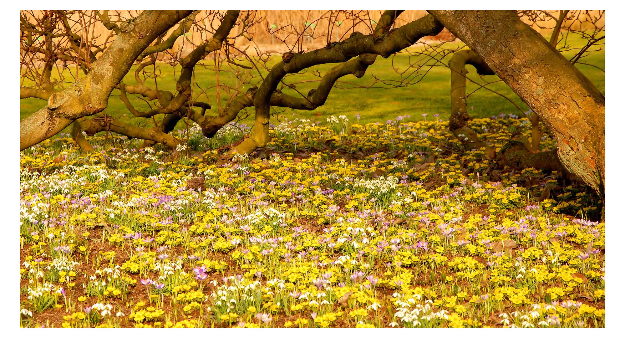 Sous le magnolia âgé