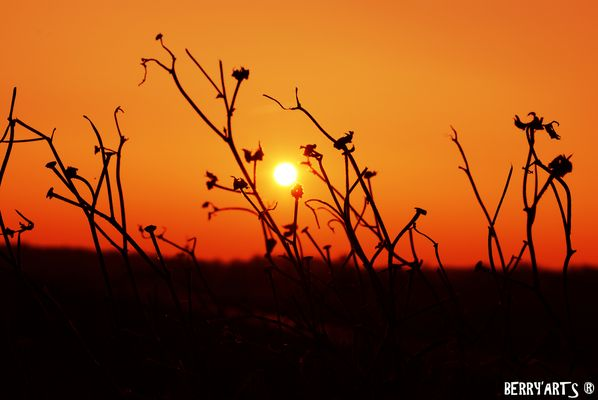 Sous le soleil ...