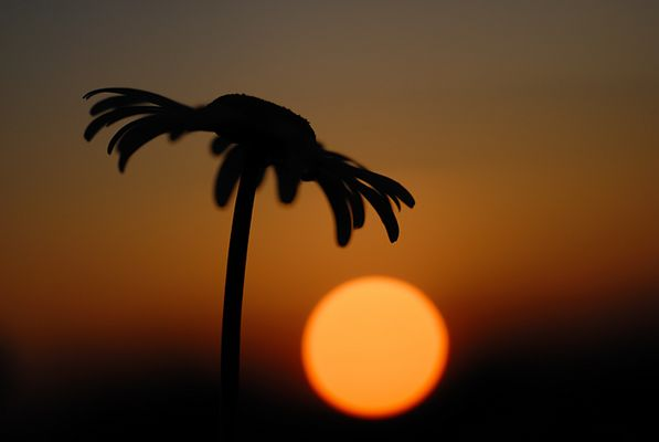 Sous le soleil des tropiques