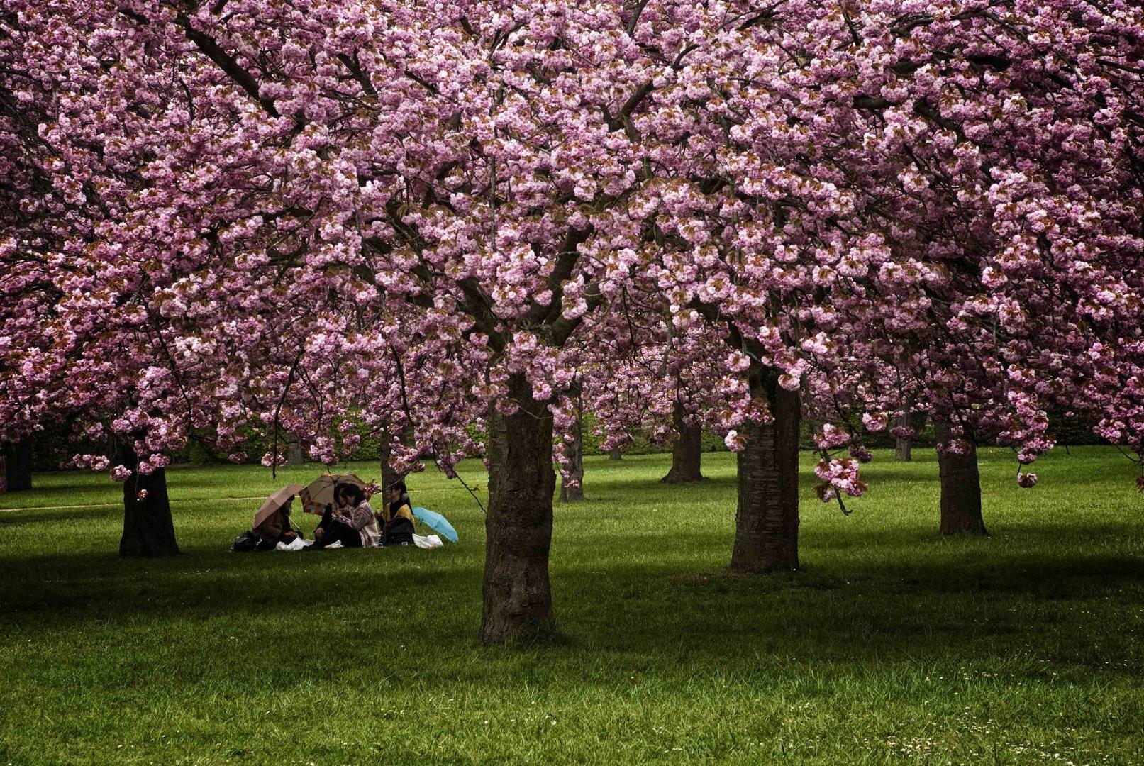 Sous les arbres en fleurs photo et image arbres - Arbre fleur mauve printemps ...