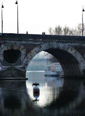 Sous les ponts...le Cormoran (Toulouse)