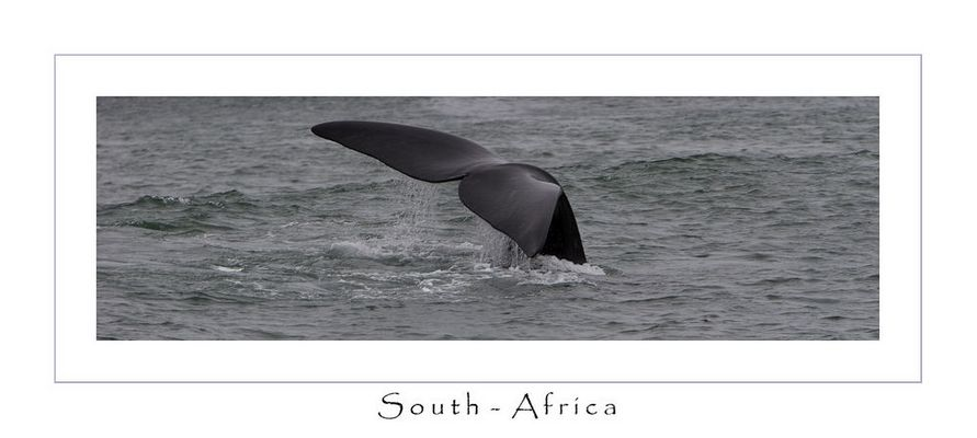 South-Africa Wale